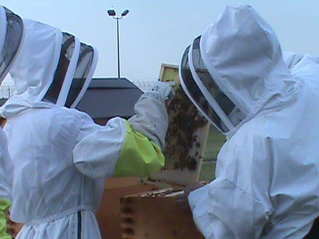 LorCI Bee Keeping Program and Reception Reform