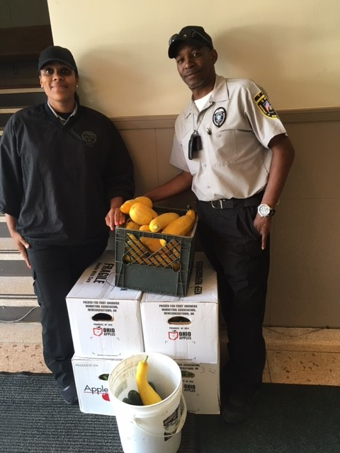 TCI Gardens Donates Over 100lbs of Fresh Produce